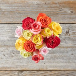 Rosas Coloridas - Médio